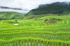 Rice terraces field in Rainning season at Tule Stock Photos