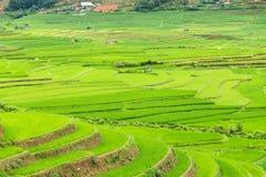 Rice terraces field in Rainning season at Tule Royalty Free Stock Image