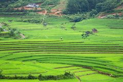 Rice terraces field in Rainning season at Tule Stock Image