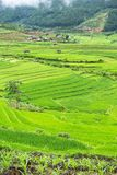 Rice terraces field in Rainning season at Tule Stock Photography