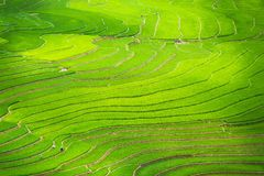 Rice terraces field in Rainning season at Tule Royalty Free Stock Photography