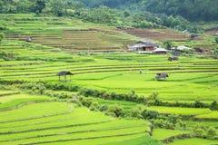 Rice terraces field in Rainning season at Tule Royalty Free Stock Images