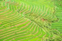 Rice terraces field in Rainning season at Tule Stock Photo