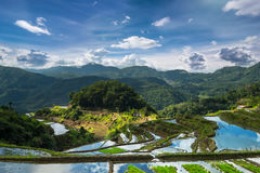 Rice terraces fields in Ifugao province. Banaue, Philippines Royalty Free Stock Photos