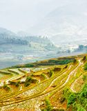 Rice terraces filled with water at highlands in Vietnam royalty free stock photo