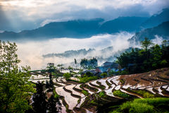 Rice terraces and fog Royalty Free Stock Photography