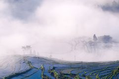 Rice terraces and fog royalty free stock image