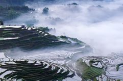 Rice terraces and fog royalty free stock photo