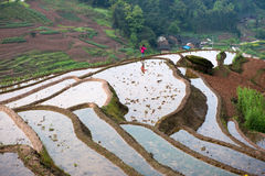 Rice terraces and girl Stock Images