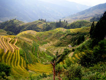 Rice terraces - Guilin - China Stock Image