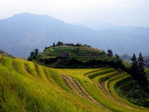 Rice terraces - Guilin - China Royalty Free Stock Photos