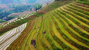 Rice Terraces stock video