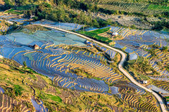 Rice terraces of the H'Mong ethnic people in Y Ty, Laocai, Vietnam at the water filling season (May 2015) Royalty Free Stock Photography