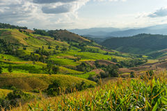 Rice terraces on hill in Chiang Mai, Thailand Stock Photos