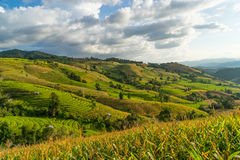 Rice terraces on hill in Chiang Mai, Thailand Royalty Free Stock Image