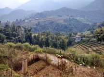 The rice terraces royalty free stock images