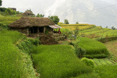 Rice terraces house. Mountain home surrounded by rice terraces in the Himalayan mountains, Nepal, with family outside Stock Photography