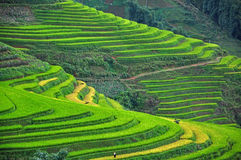 Free RICE TERRACES IN SAPA, VIETNAM Stock Photography - 34395172