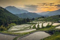Rice Terraces. Japanese rice terraces at sunset. Maruyama-senmaida, Kumano, Japan stock photo