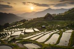 Rice Terraces. Japanese rice terraces at sunset. Maruyama-senmaida, Kumano, Japan royalty free stock photography