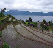 Rice terraces on the lake shore Stock Images