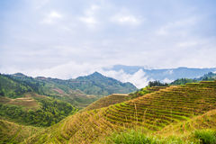 Rice terraces landscape in may (village Dazhai, Guangxi province Royalty Free Stock Photos