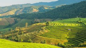 Rice terraces landscape on mountain, time lapse stock video