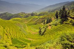 Rice Terraces, Longji Titian, Guilin, Guangxi, China. stock photo