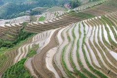 Rice terraces at Longsheng, China Royalty Free Stock Image
