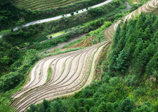 Rice terraces at Longsheng, China Royalty Free Stock Images