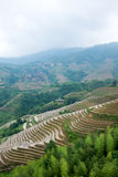 Rice terraces at Longsheng, China Stock Images
