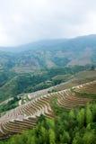 Rice terraces at Longsheng, China Stock Images