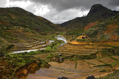 Rice terraces Madagascar. Scenic view of rice terraces in center of island of Madagascar, mountains in background Stock Image