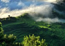 Rice Terraces in Maligcong, Mountain Province, Philippines. Rice Terraces view from the top of Mt. Kuoapey. This is during the sunrise Stock Image