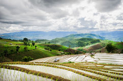 Rice terraces Royalty Free Stock Photography