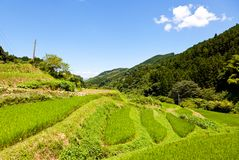 Rice Terraces of the mountain Stock Images