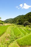 Rice Terraces of the mountain Royalty Free Stock Photos
