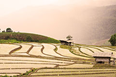 Rice terraces on the mountain. Morning fog on the mountain at chiangmai thailand royalty free stock image