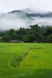Rice terraces and mountain, Thailand. Fresh and organic rice farm Stock Photos