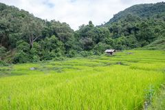Rice terraces on a mountain, and there is a hut in the middle of the rice field. S Stock Image