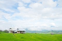 Rice terraces on a mountain, and there is a hut in the middle of the rice field. S Stock Photos