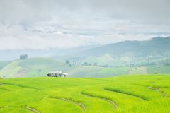 Rice terraces on a mountain, and there is a hut in the middle of the rice field. S Stock Photo