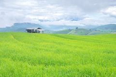 Rice terraces on a mountain, and there is a hut in the middle of the rice field. S Royalty Free Stock Photography