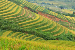 Rice terraces in the mountains. In Sapa, Vietnam Stock Images