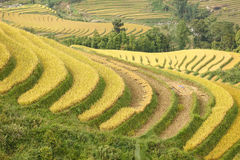 Rice terraces in the mountains. In Sapa, Vietnam Stock Photography