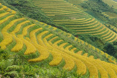 Rice terraces in the mountains Stock Photos