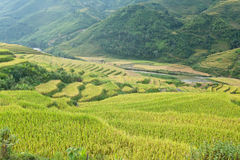 Rice terraces in the mountains Stock Images