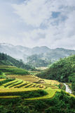 Rice terraces with mountains and clouds at background Royalty Free Stock Images