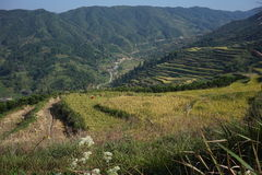 The rice terraces in the mountains Royalty Free Stock Photos
