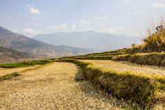 Rice terraces and mountains Stock Photo